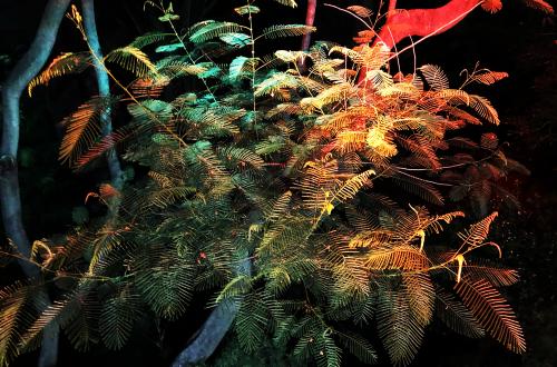 Cactus_outdoor17
